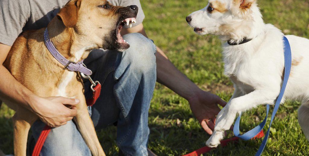 Philadelphia owner tries to retain dog to prevent injury