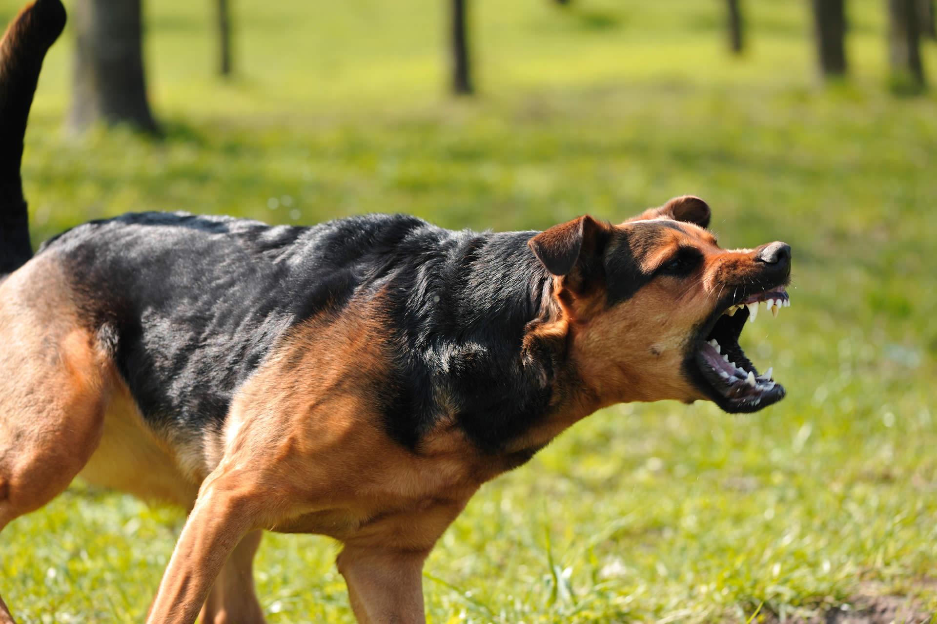 PA Dog Bite Attorney