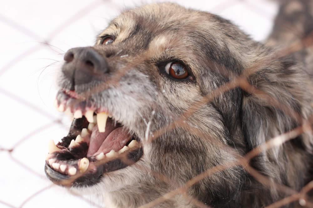 Dog Attacks: The Statute of Liability